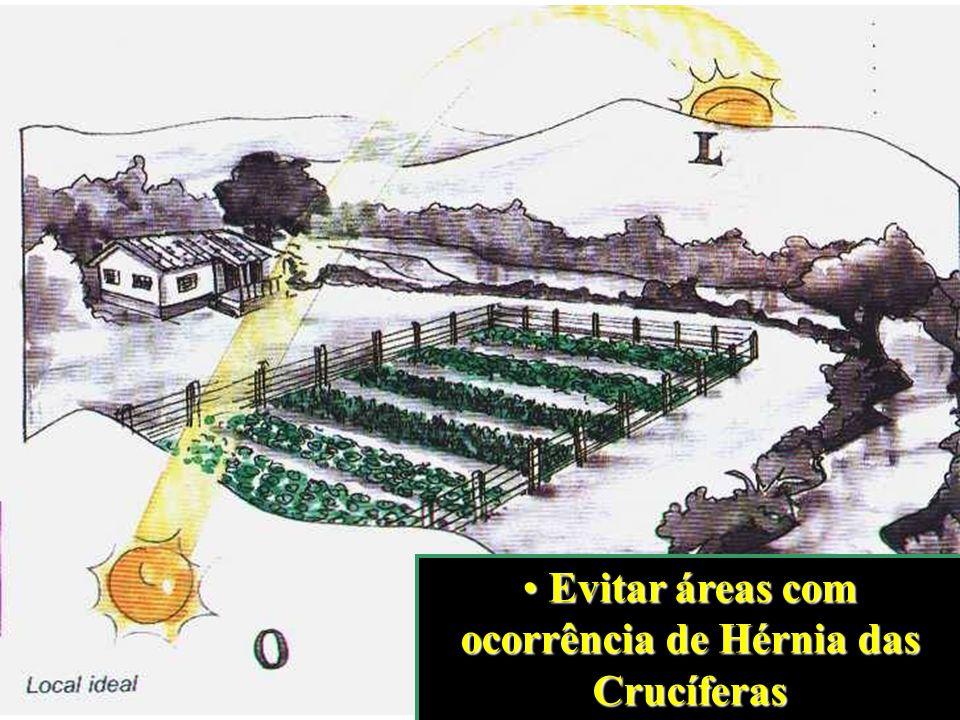Evitar áreas com ocorrência de Hérnia das Crucíferas Evitar áreas com ocorrência de Hérnia das Crucíferas