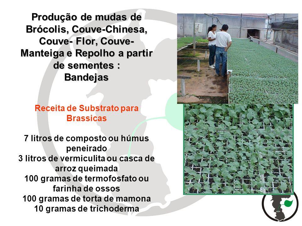 Produção de mudas de Brócolis, Couve-Chinesa, Couve- Flor, Couve- Manteiga e Repolho a partir de sementes : Bandejas Produção de mudas de Brócolis, Co