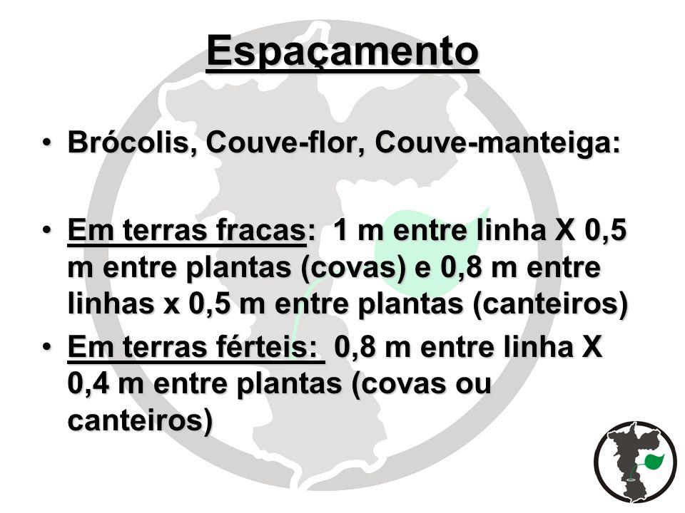 Espaçamento Brócolis, Couve-flor, Couve-manteiga:Brócolis, Couve-flor, Couve-manteiga: Em terras fracas: 1 m entre linha X 0,5 m entre plantas (covas)