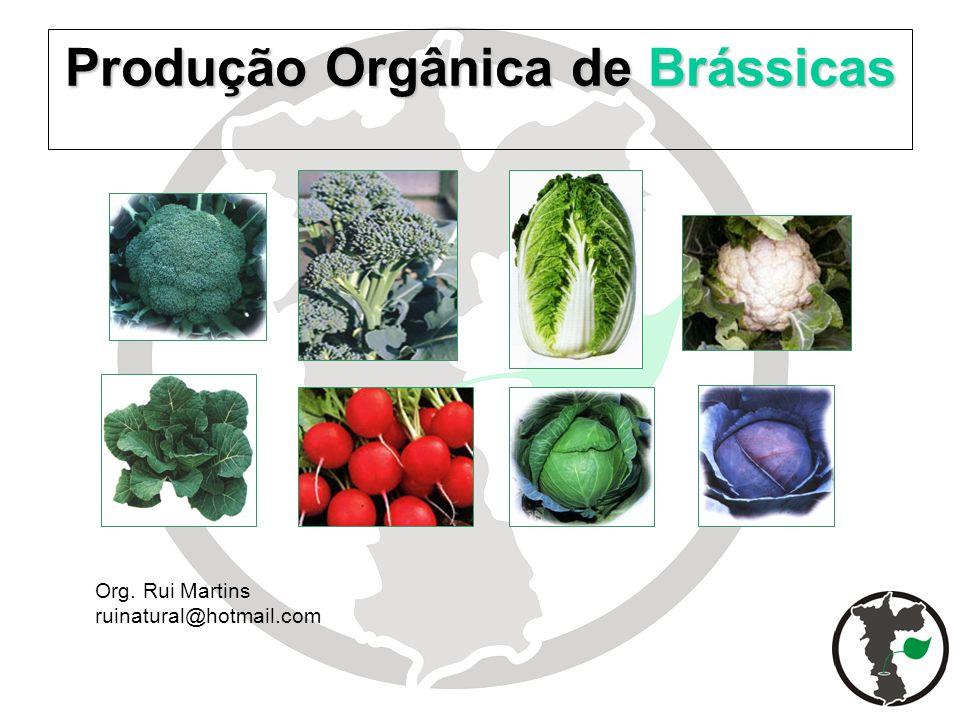 Produção Orgânica de Brássicas Org. Rui Martins ruinatural@hotmail.com