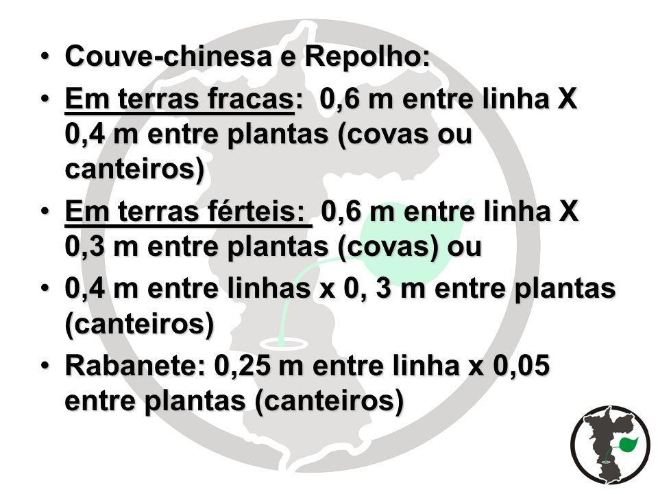 Couve-chinesa e Repolho:Couve-chinesa e Repolho: Em terras fracas: 0,6 m entre linha X 0,4 m entre plantas (covas ou canteiros)Em terras fracas: 0,6 m