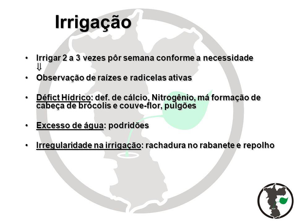 Irrigação Irrigar 2 a 3 vezes pôr semana conforme a necessidadeIrrigar 2 a 3 vezes pôr semana conforme a necessidade Observação de raízes e radicelas