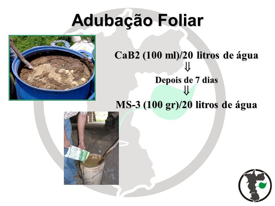 CaB2 (100 ml)/20 litros de água Depois de 7 dias MS-3 (100 gr)/20 litros de água