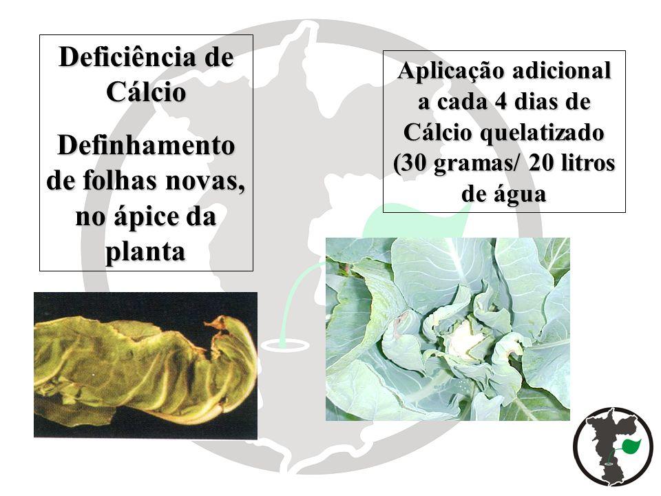 Deficiência de Cálcio Definhamento de folhas novas, no ápice da planta Aplicação adicional a cada 4 dias de Cálcio quelatizado (30 gramas/ 20 litros d