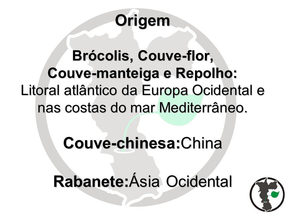 Origem Brócolis, Couve-flor, Couve-manteiga e Repolho: Litoral atlântico da Europa Ocidental e nas costas do mar Mediterrâneo. Couve-chinesa:China Rab