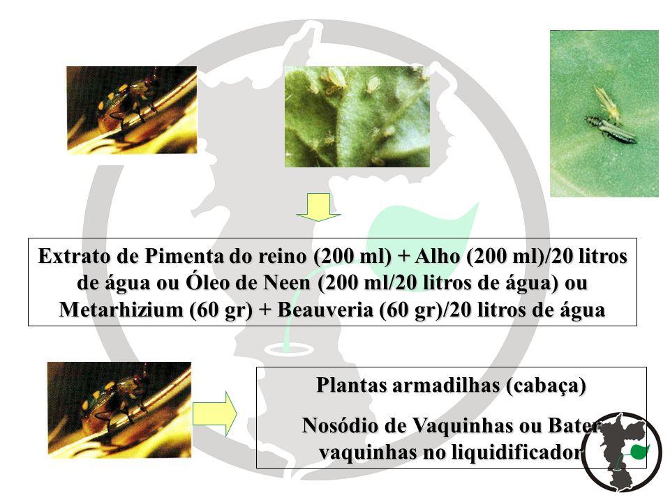 Extrato de Pimenta do reino (200 ml) + Alho (200 ml)/20 litros de água ou Óleo de Neen (200 ml/20 litros de água) ou Metarhizium (60 gr) + Beauveria (