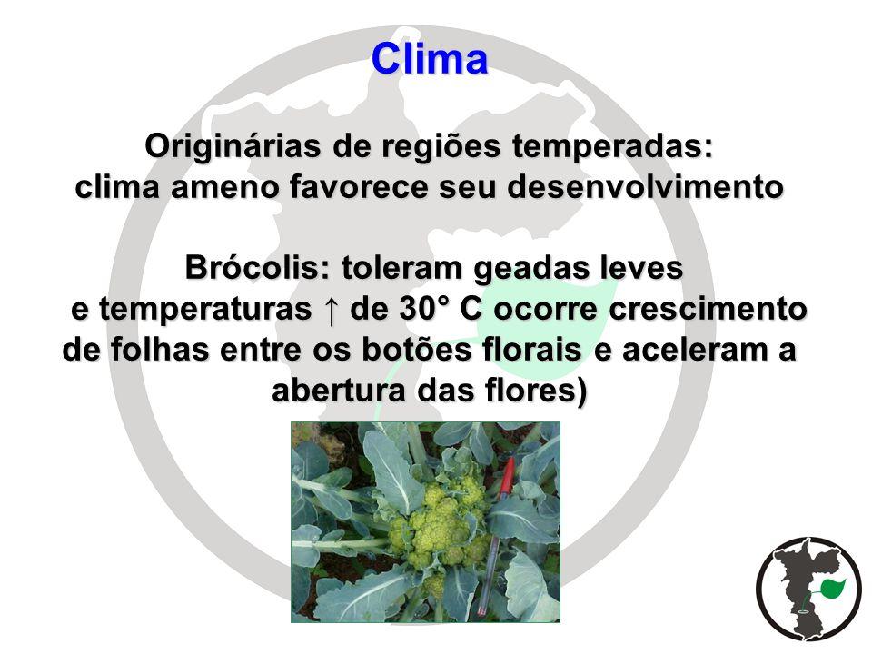 Clima Originárias de regiões temperadas: clima ameno favorece seu desenvolvimento Brócolis: toleram geadas leves e temperaturas de 30° C ocorre cresci