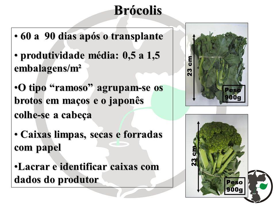 Brócolis 60 a 90 dias após o transplante 60 a 90 dias após o transplante produtividade média: 0,5 a 1,5 embalagens/m² produtividade média: 0,5 a 1,5 e