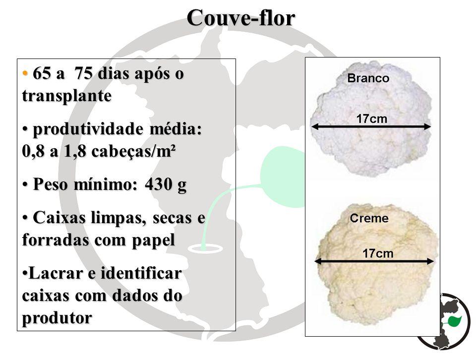 Couve-flor Couve-flor 65 a 75 dias após o transplante 65 a 75 dias após o transplante produtividade média: 0,8 a 1,8 cabeças/m² produtividade média: 0