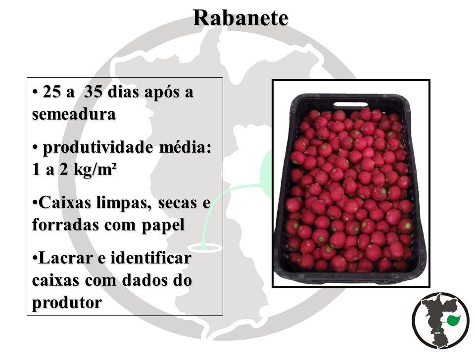 Rabanete Rabanete 25 a 35 dias após a semeadura 25 a 35 dias após a semeadura produtividade média: 1 a 2 kg/m² produtividade média: 1 a 2 kg/m² Caixas