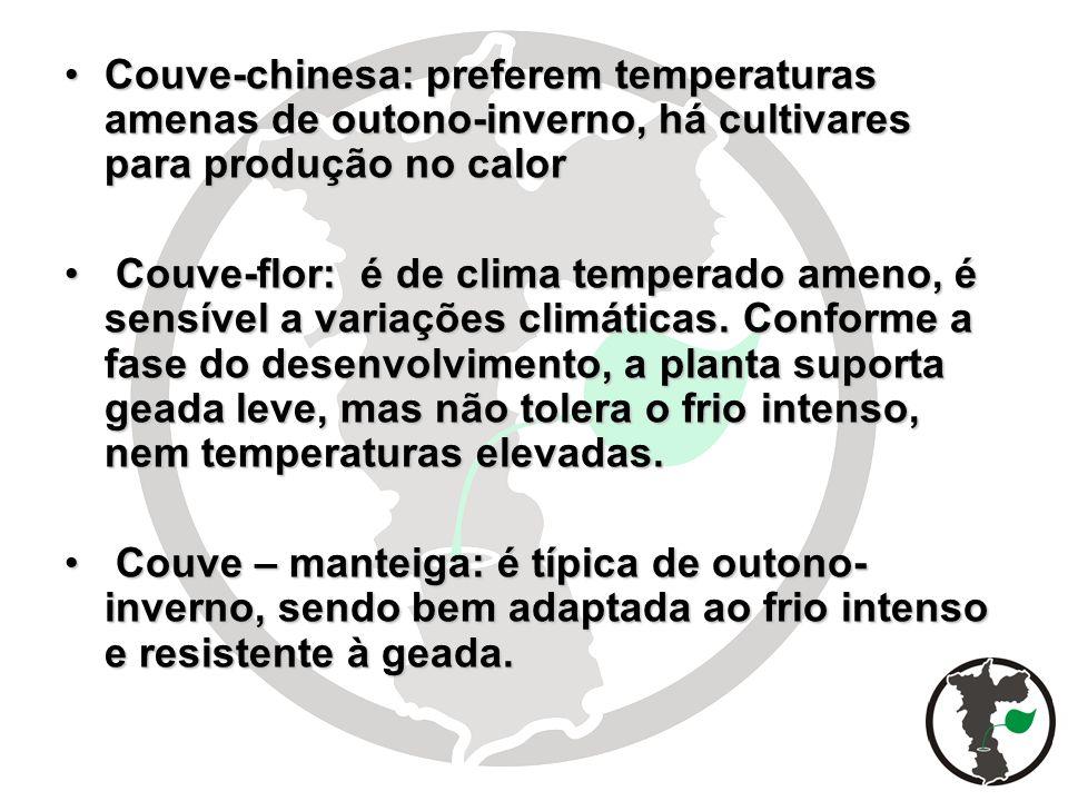 Couve-chinesa: preferem temperaturas amenas de outono-inverno, há cultivares para produção no calorCouve-chinesa: preferem temperaturas amenas de outo