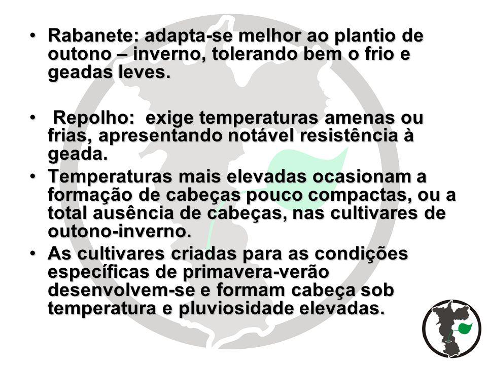 Rabanete: adapta-se melhor ao plantio de outono – inverno, tolerando bem o frio e geadas leves.Rabanete: adapta-se melhor ao plantio de outono – inver