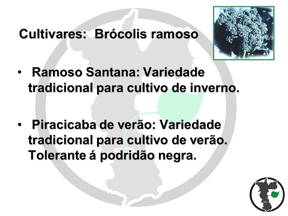 Cultivares: Brócolis ramoso Ramoso Santana: Variedade tradicional para cultivo de inverno. Piracicaba de verão: Variedade tradicional para cultivo de