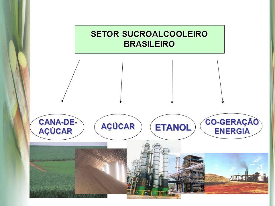 SETOR SUCROALCOOLEIRO BRASILEIRO CANA-DE- AÇÚCAR AÇÚCARETANOL CO-GERAÇÃO ENERGIA