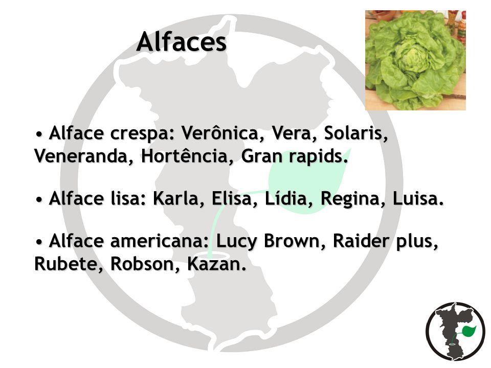 Alfaces Alface crespa: Verônica, Vera, Solaris, Veneranda, Hortência, Gran rapids. Alface crespa: Verônica, Vera, Solaris, Veneranda, Hortência, Gran