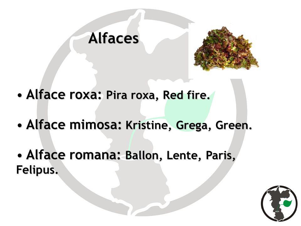 Alfaces Alface roxa: Pira roxa, Red fire. Alface roxa: Pira roxa, Red fire. Alface mimosa: Kristine, Grega, Green. Alface mimosa: Kristine, Grega, Gre