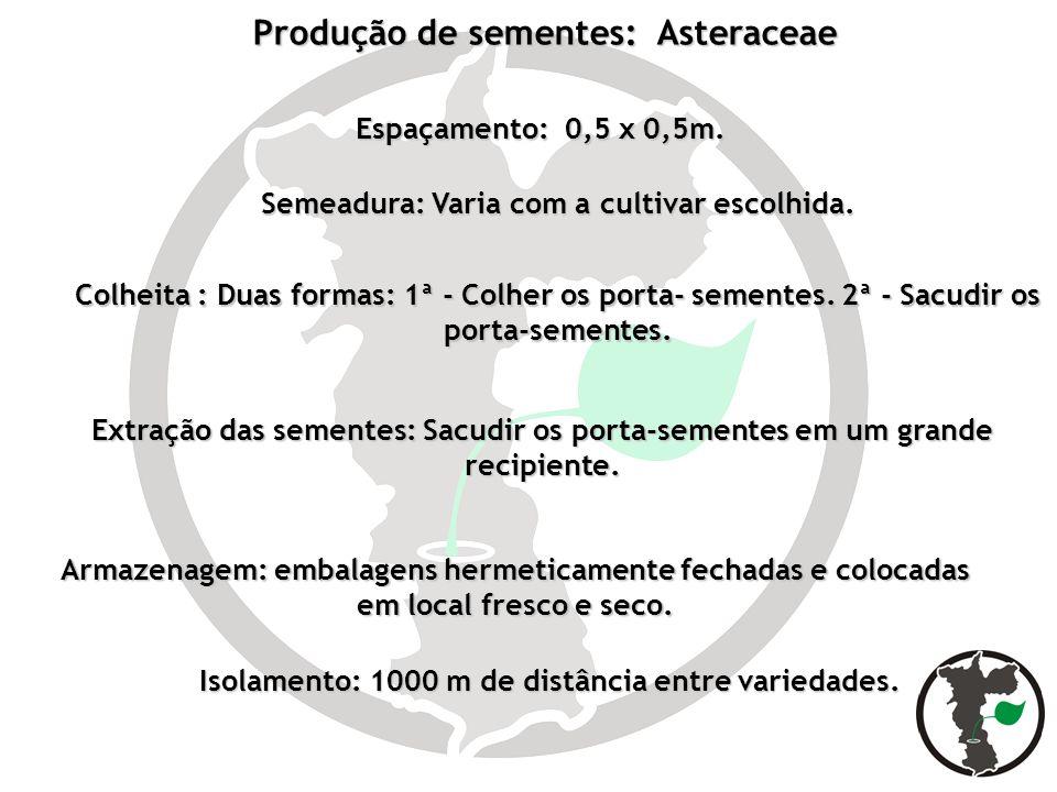 Isolamento: 1000 m de distância entre variedades. Produção de sementes: Asteraceae Espaçamento: 0,5 x 0,5m. Semeadura: Varia com a cultivar escolhida.