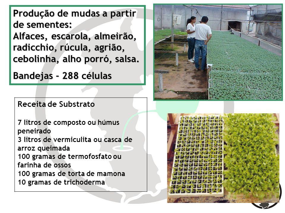 Produção de mudas a partir de sementes: Alfaces, escarola, almeirão, radicchio, rúcula, agrião, cebolinha, alho porró, salsa. Bandejas - 288 células R