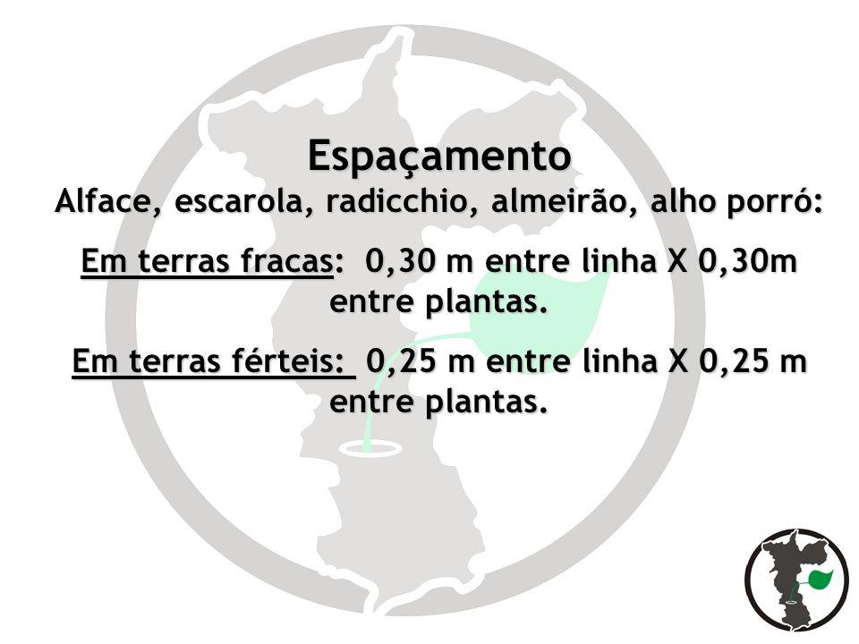 Espaçamento Alface, escarola, radicchio, almeirão, alho porró: Em terras fracas: 0,30 m entre linha X 0,30m entre plantas. Em terras férteis: 0,25 m e