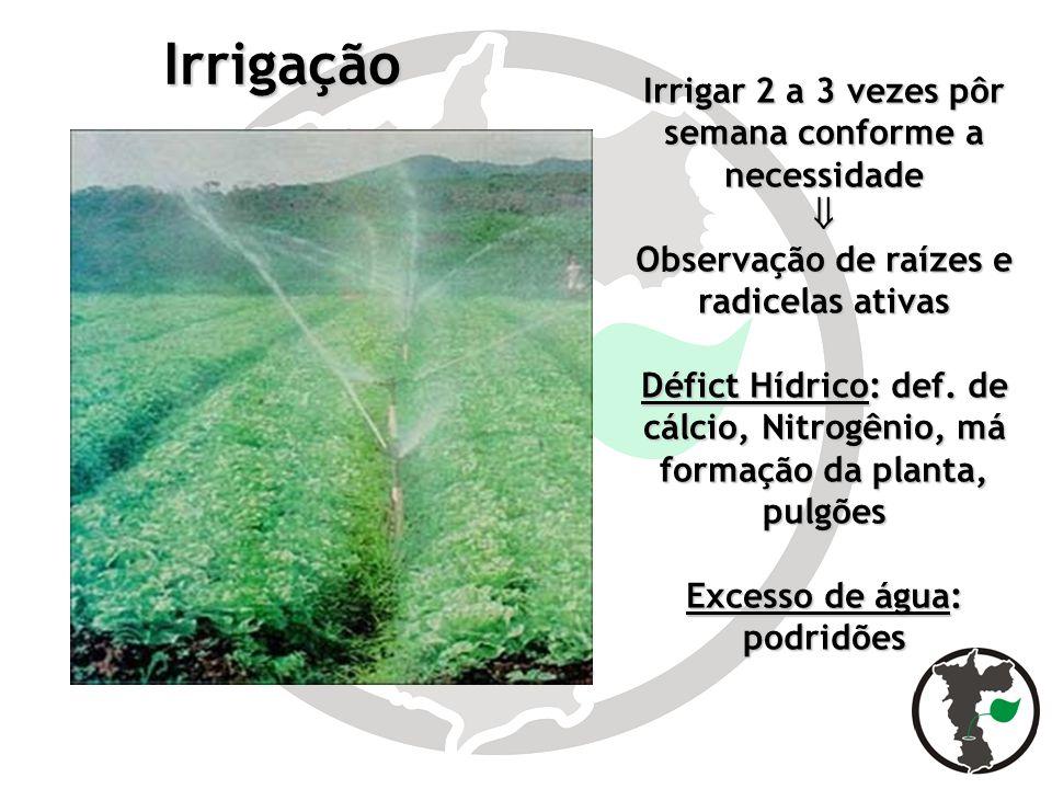 Irrigação Irrigar 2 a 3 vezes pôr semana conforme a necessidade Observação de raízes e radicelas ativas Défict Hídrico: def. de cálcio, Nitrogênio, má