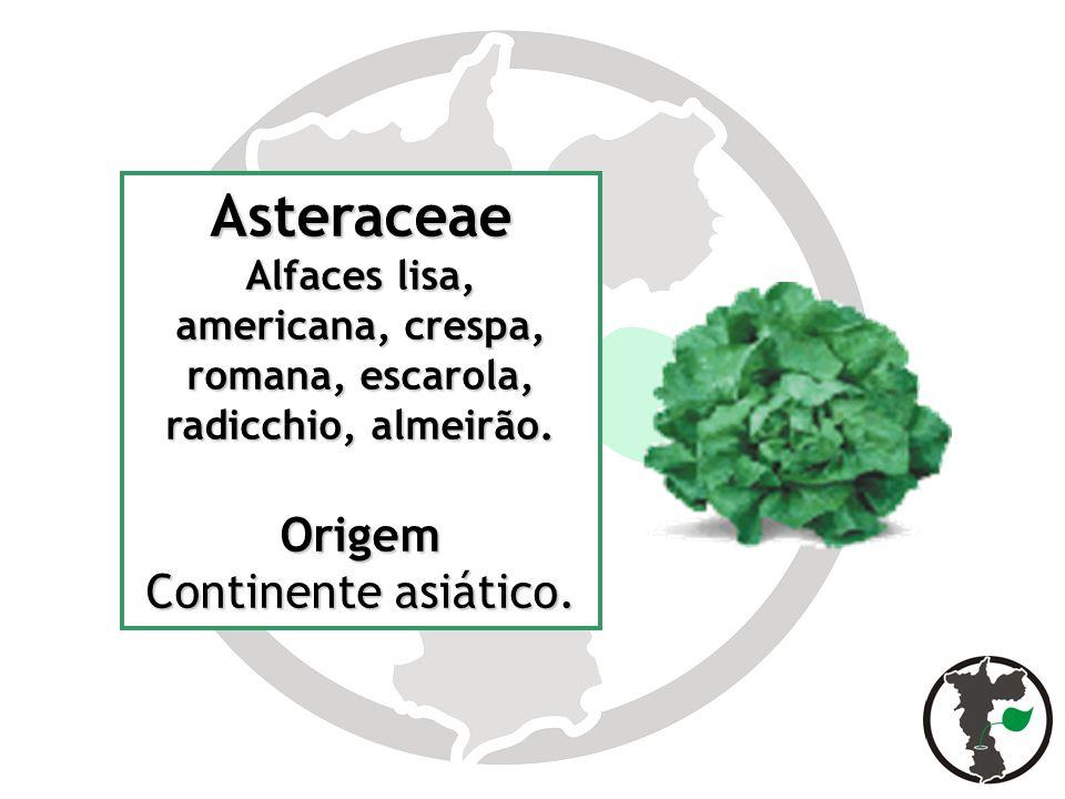 Asteraceae Alfaces lisa, americana, crespa, romana, escarola, radicchio, almeirão. Origem Continente asiático.