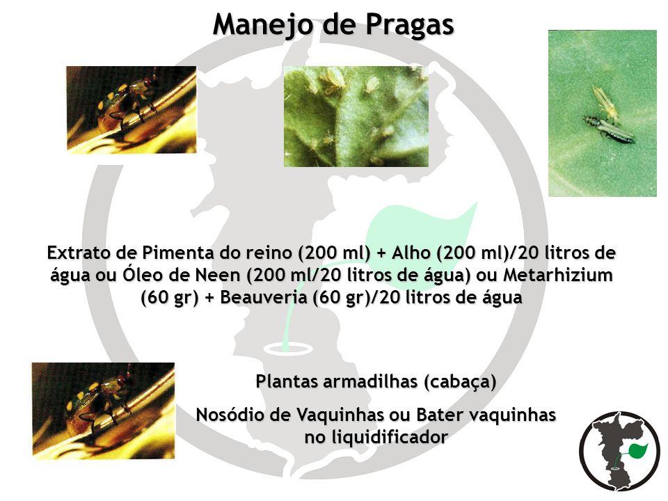 Manejo de Pragas Extrato de Pimenta do reino (200 ml) + Alho (200 ml)/20 litros de água ou Óleo de Neen (200 ml/20 litros de água) ou Metarhizium (60