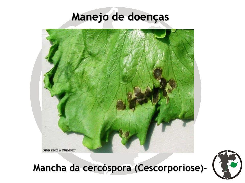 Manejo de doenças Mancha da cercóspora (Cescorporiose)-