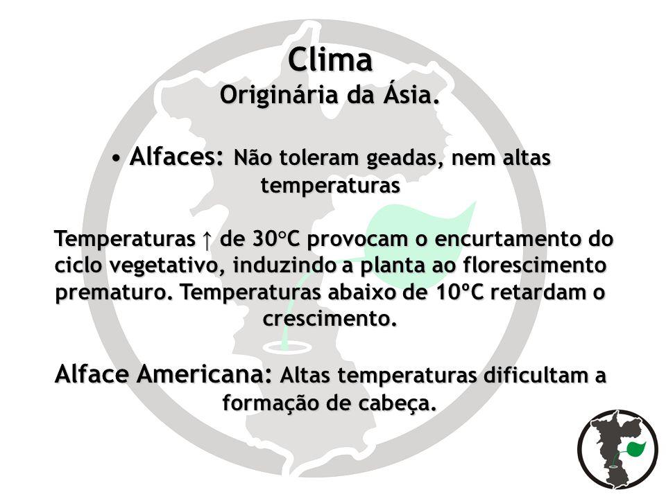 Clima Originária da Ásia. Alfaces: Não toleram geadas, nem altas temperaturas Alfaces: Não toleram geadas, nem altas temperaturas Temperaturas de 30°C