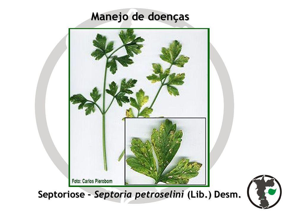 Manejo de doenças Septoriose - Septoria petroselini (Lib.) Desm.