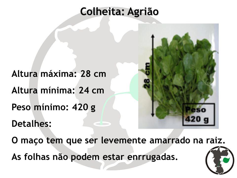 Colheita: Agrião Altura máxima: 28 cm Altura mínima: 24 cm Peso mínimo: 420 g Detalhes: O maço tem que ser levemente amarrado na raiz. As folhas não p