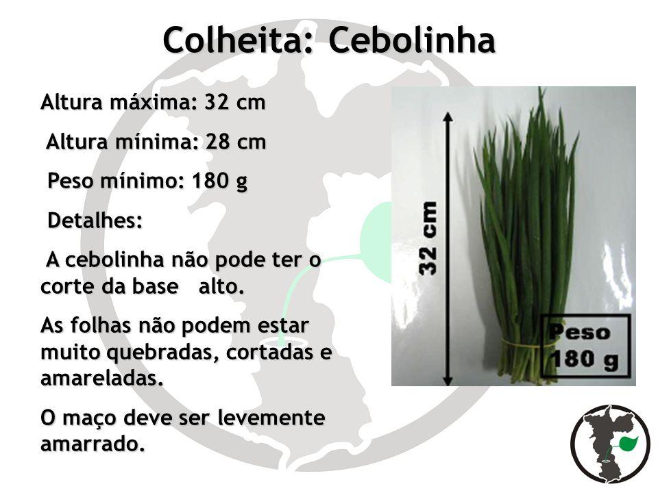 Colheita: Cebolinha Altura máxima: 32 cm Altura mínima: 28 cm Altura mínima: 28 cm Peso mínimo: 180 g Peso mínimo: 180 g Detalhes: Detalhes: A cebolin