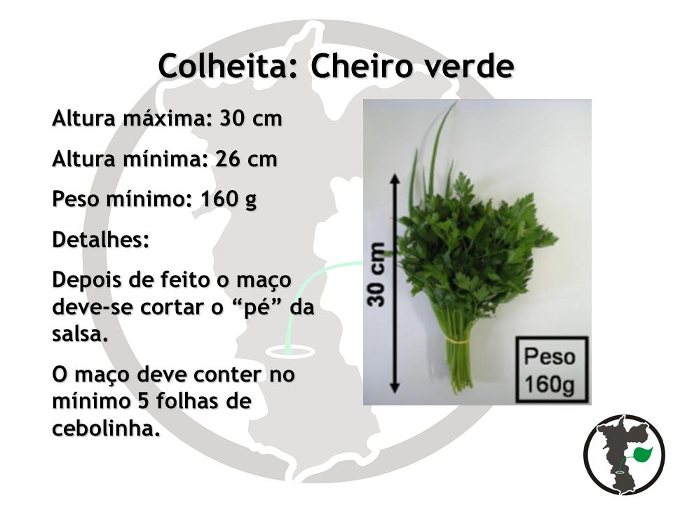 Colheita: Cheiro verde Altura máxima: 30 cm Altura mínima: 26 cm Peso mínimo: 160 g Detalhes: Depois de feito o maço deve-se cortar o pé da salsa. O m