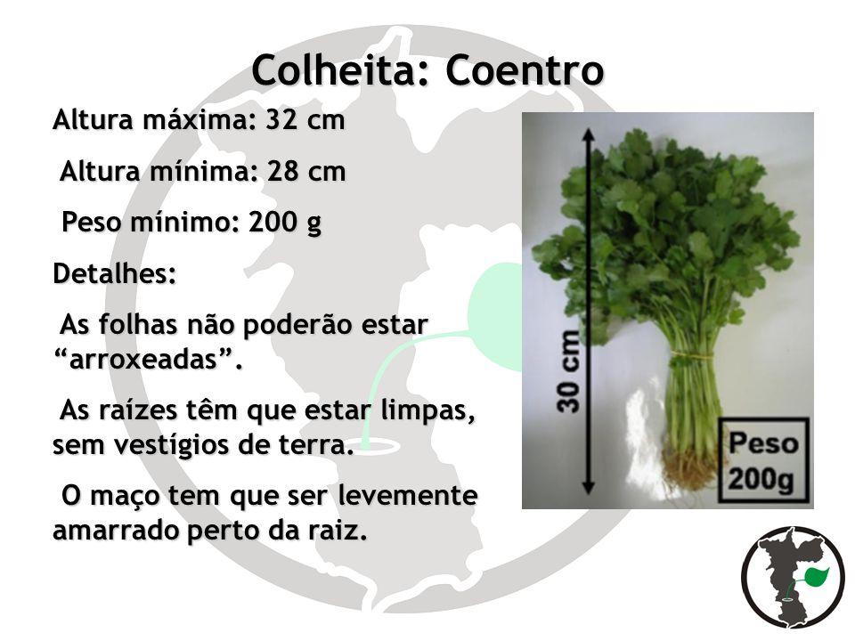 Colheita: Coentro Altura máxima: 32 cm Altura mínima: 28 cm Altura mínima: 28 cm Peso mínimo: 200 g Peso mínimo: 200 gDetalhes: As folhas não poderão