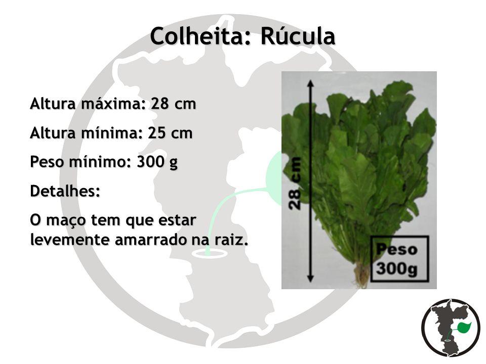 Colheita: Rúcula Altura máxima: 28 cm Altura mínima: 25 cm Peso mínimo: 300 g Detalhes: O maço tem que estar levemente amarrado na raiz.