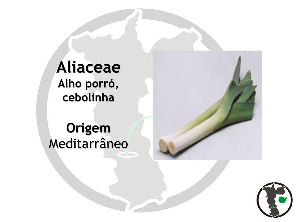 Aliaceae Alho porró, cebolinha OrigemMeditarrâneo