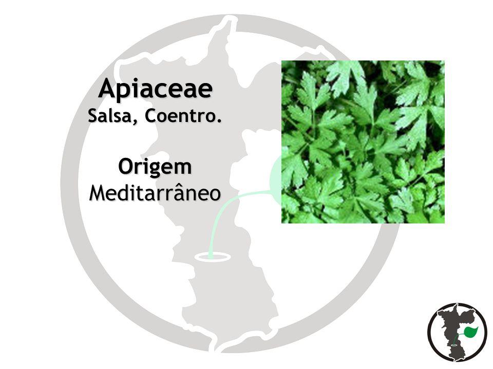 Apiaceae Salsa, Coentro. OrigemMeditarrâneo