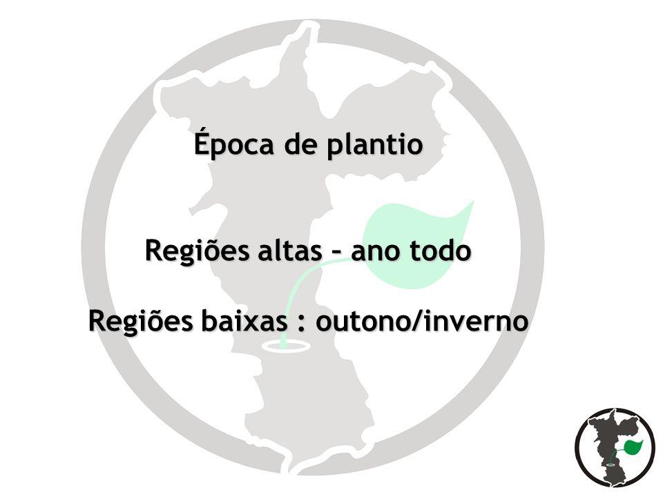 Alfaces Alface crespa: Verônica, Vera, Solaris, Veneranda, Hortência, Gran rapids.