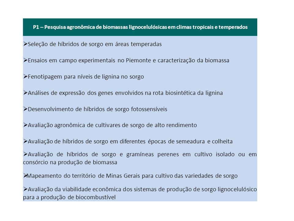 P1 – Pesquisa agronômica de biomassas lignocelulósicas em climas tropicais e temperados Seleção de híbridos de sorgo em áreas temperadas Ensaios em ca