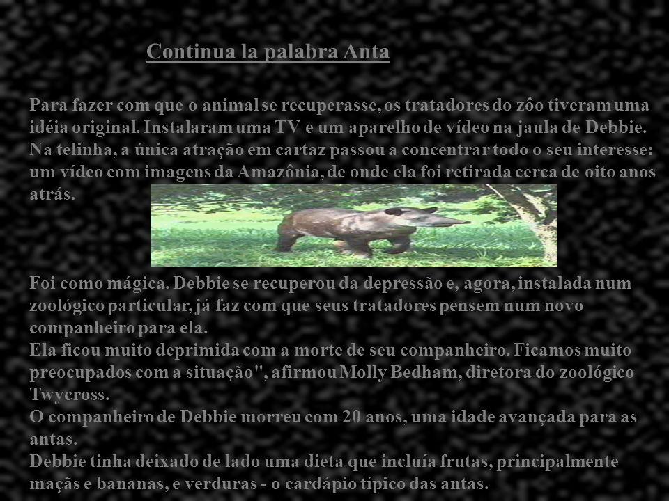 Cotinua la palabra Anta A anta esconde-se na água. O macho adulto isola-se como o javali mas é muito mais cauteloso. Os demais vivem em grupos. Os jov
