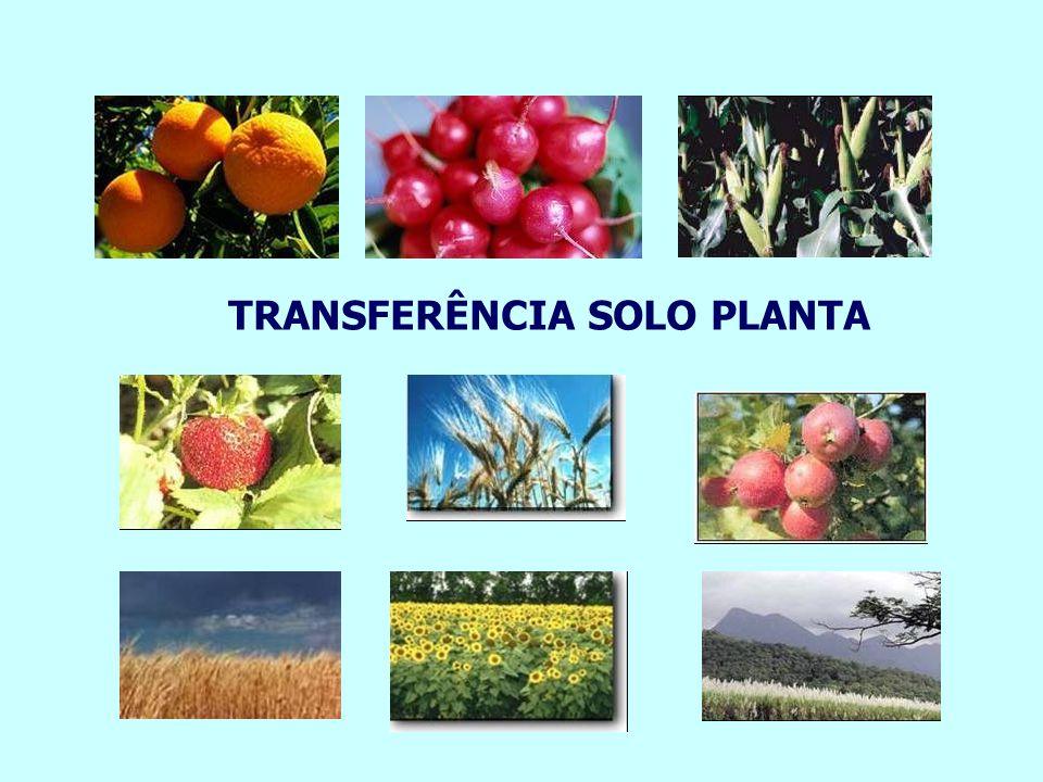 TRANSFERÊNCIA SOLO PLANTA