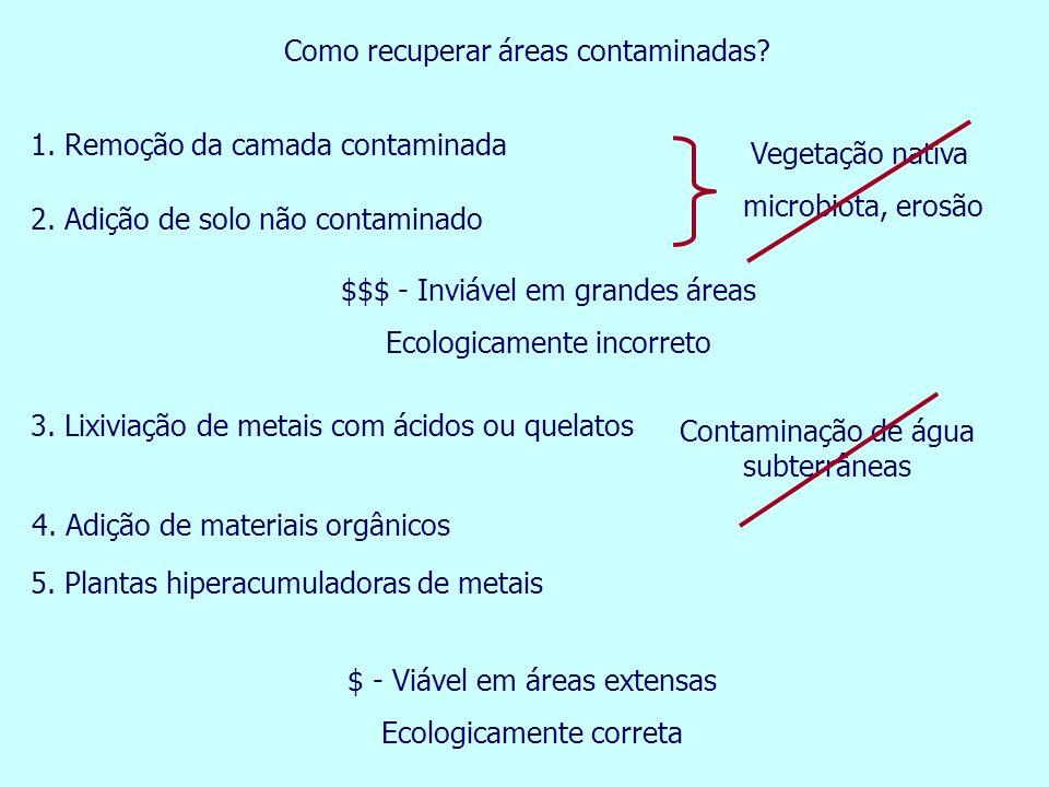 Como recuperar áreas contaminadas? 5. Plantas hiperacumuladoras de metais $$$ - Inviável em grandes áreas Ecologicamente incorreto Contaminação de águ