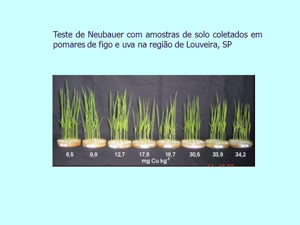 Teste de Neubauer com amostras de solo coletados em pomares de figo e uva na região de Louveira, SP
