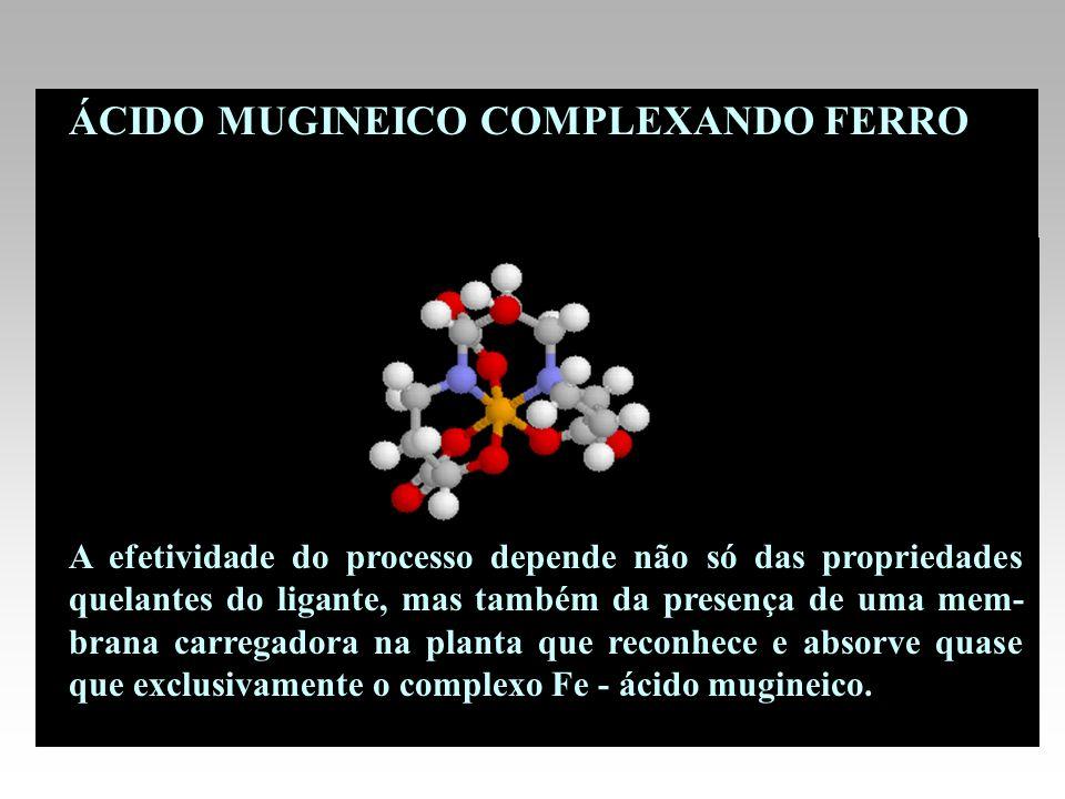 ÁCIDO MUGINEICO COMPLEXANDO FERRO A efetividade do processo depende não só das propriedades quelantes do ligante, mas também da presença de uma mem- b