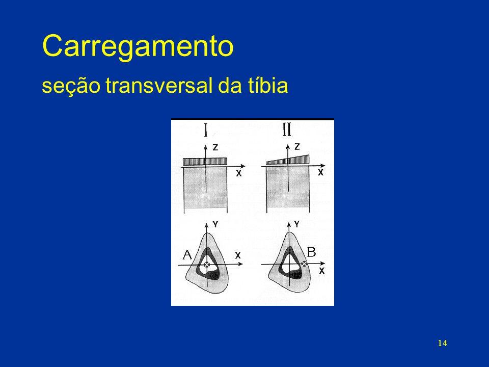 14 Carregamento seção transversal da tíbia