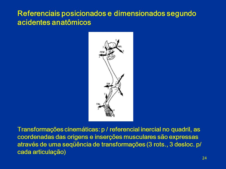 24 Referenciais posicionados e dimensionados segundo acidentes anatômicos Transformações cinemáticas: p / referencial inercial no quadril, as coordenadas das origens e inserções musculares são expressas através de uma seqüência de transformações (3 rots., 3 desloc.