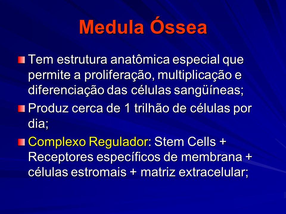 Medula Óssea Tem estrutura anatômica especial que permite a proliferação, multiplicação e diferenciação das células sangüíneas; Produz cerca de 1 tril