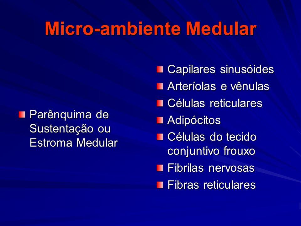 Micro-ambiente Medular Parênquima de Sustentação ou Estroma Medular Capilares sinusóides Arteríolas e vênulas Células reticulares Adipócitos Células d