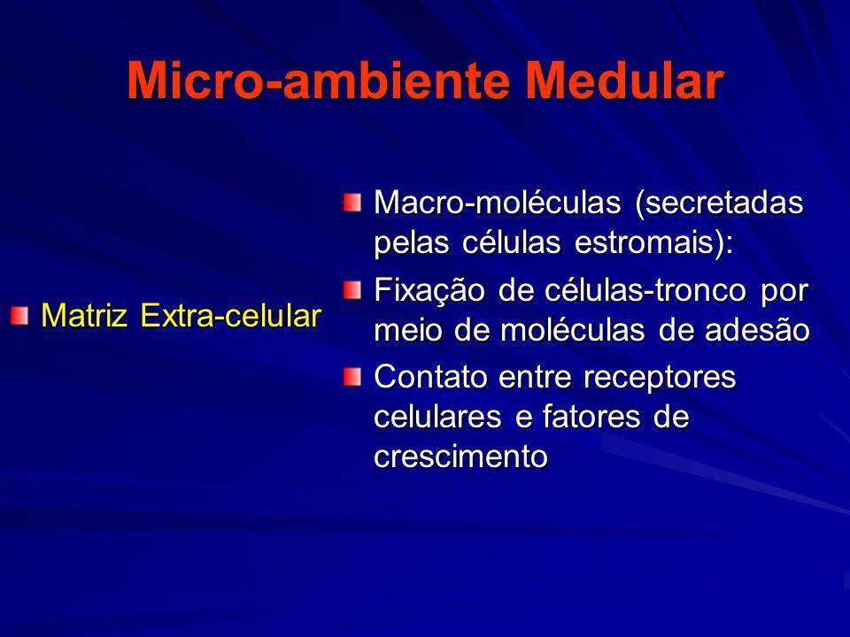 Micro-ambiente Medular Matriz Extra-celular Macro-moléculas (secretadas pelas células estromais): Fixação de células-tronco por meio de moléculas de a