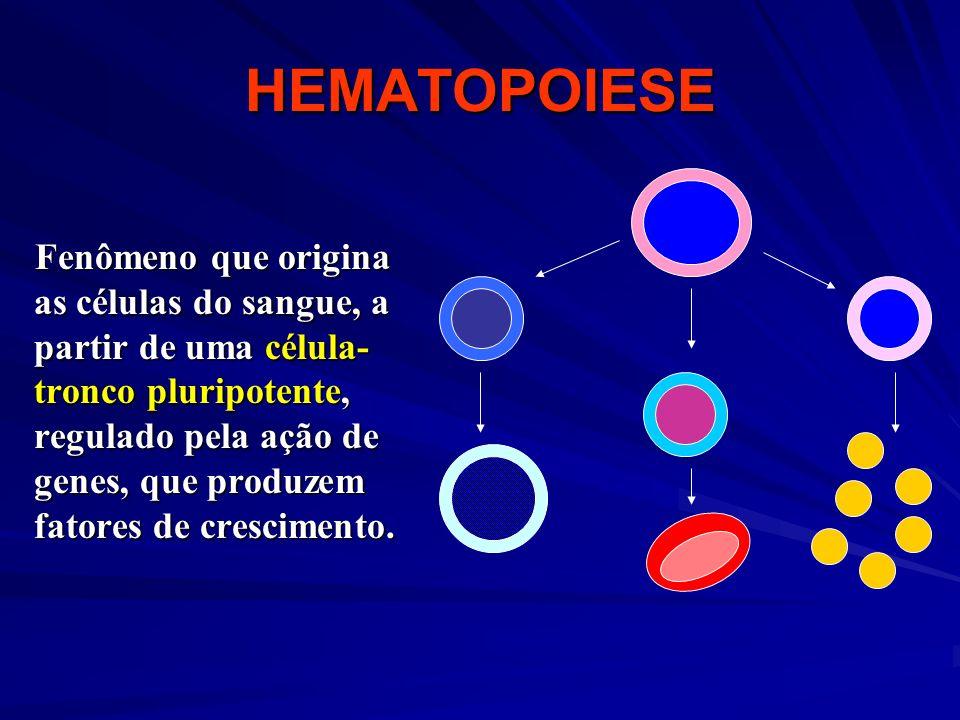 HEMATOPOIESE Fenômeno que origina as células do sangue, a partir de uma célula- tronco pluripotente, regulado pela ação de genes, que produzem fatores