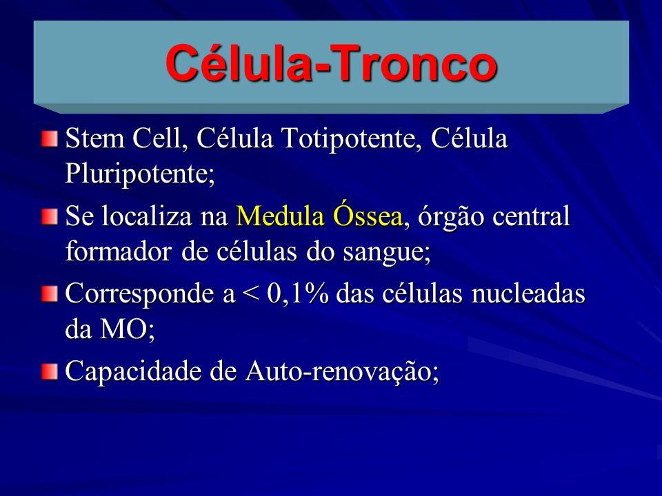 Célula-Tronco Stem Cell, Célula Totipotente, Célula Pluripotente; Se localiza na Medula Óssea, órgão central formador de células do sangue; Correspond
